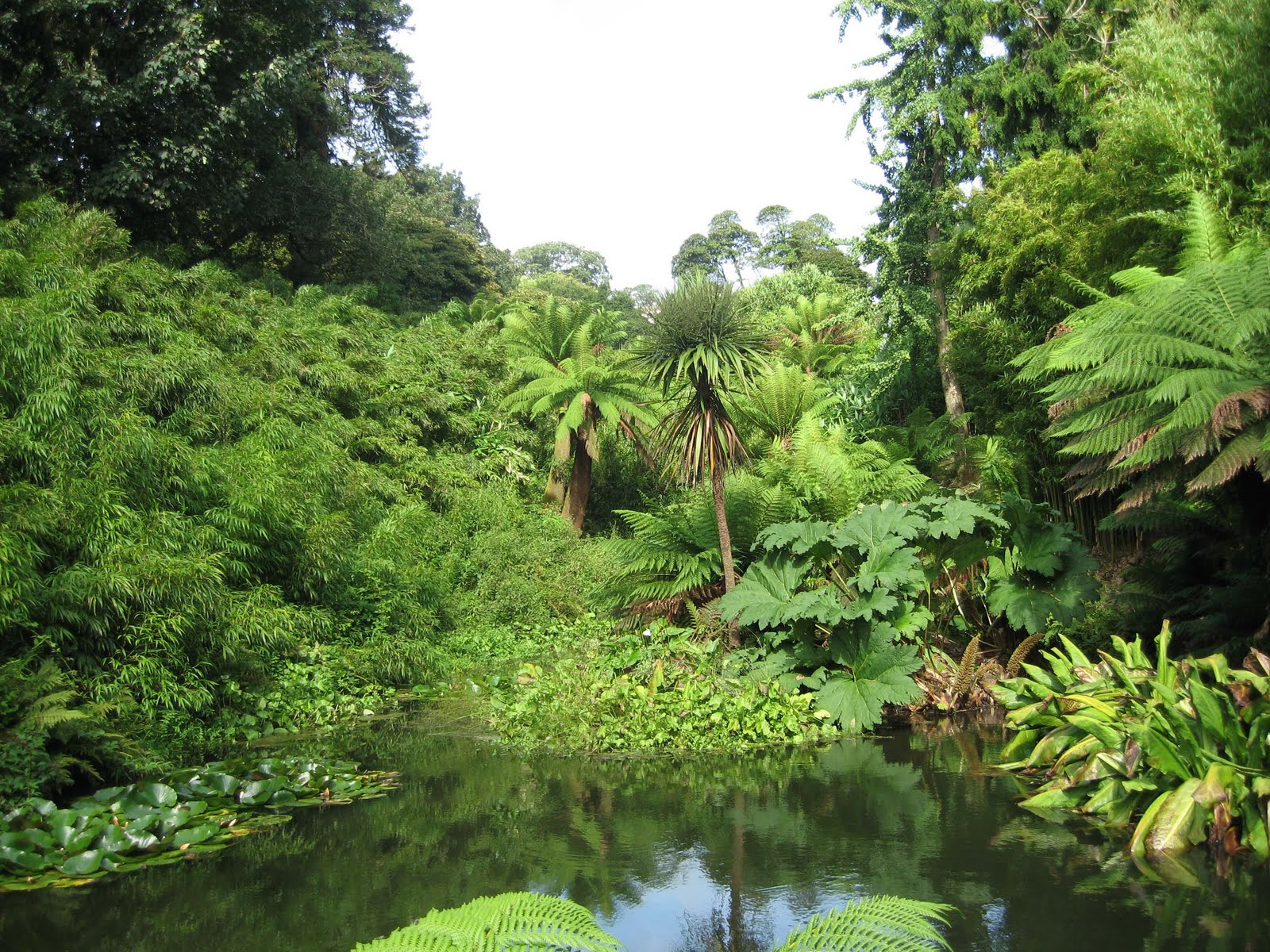 Why are rainforests important to the world